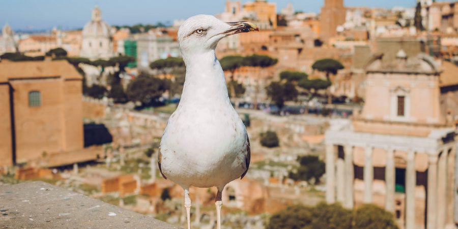 Вид на Рим и чайка